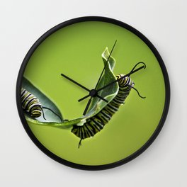 Monarch Caterpillars Wall Clock
