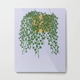 String of Pearls Plant Metal Print