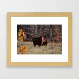 Mom Cow and calf Framed Art Print