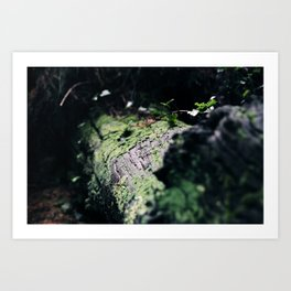 forest 3 Art Print