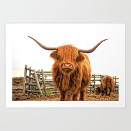 Highland Cow in a Fence Art Print
