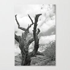 Desert Decay Canvas Print