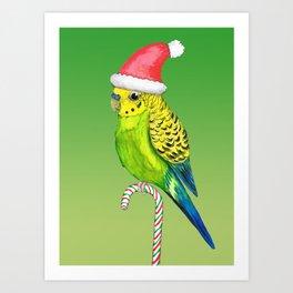Budgie Christmas style Art Print