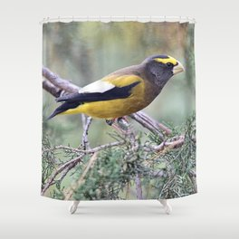 Poised: Evening Grosbeak Shower Curtain