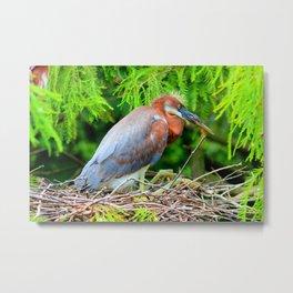 Nesting Heron Metal Print