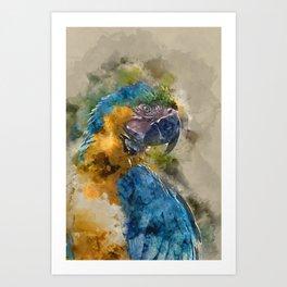 Parrot Colours Art Print