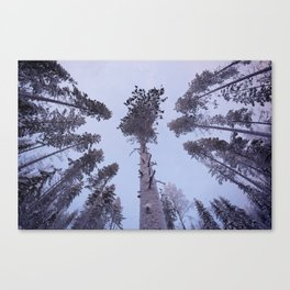Snow Trees Please Canvas Print