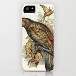 Kea Parrot (Nestor notabilis) illustrated by Elizabeth Gould (1804–1841) for John Gould's (1804-1881 iPhone Case