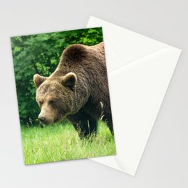 Brown bear on the search Stationery Cards