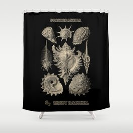 """""""Prosobranchia"""" from """"Art Forms of Nature"""" by Ernst Haeckel Shower Curtain"""