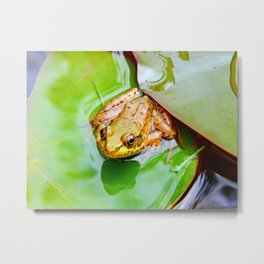 Frog on a Lily-pad Metal Print