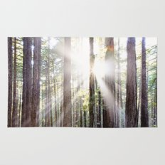 Sunburst Through the Redwoods Rug