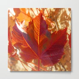 maple leaf. Autumn in Zamora. Spain Metal Print