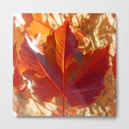 maple leaf. Autumn in Zamora. Spain Metal Print