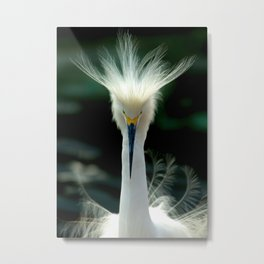 Crown of Feathers Metal Print