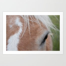 Equine Cowlick Art Print