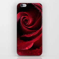 My Birthday Rose iPhone & iPod Skin