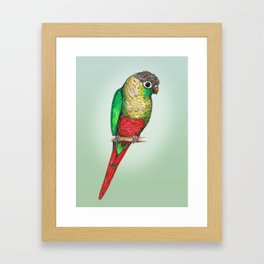 Conure with a heart on its belly Framed Art Print