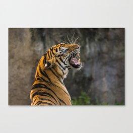 Tiger Roaring in Profile Canvas Print