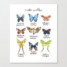 Exotic Moths Canvas Print