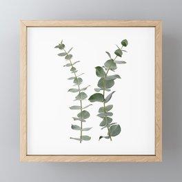Eucalyptus Branches I Framed Mini Art Print
