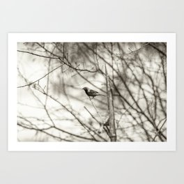 Bird - Black and White Art Print