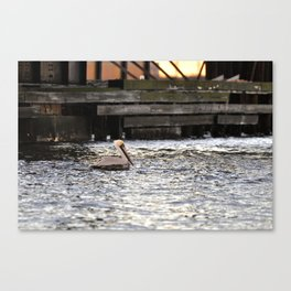 Lone Pelican in the Southern Branch of the Elizabeth River Canvas Print