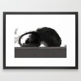 Yoga Monkey Framed Art Print