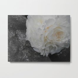 Crystal Peony by Teresa Thompson Metal Print