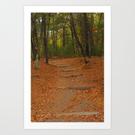 Walden Pond path into the forest Art Print