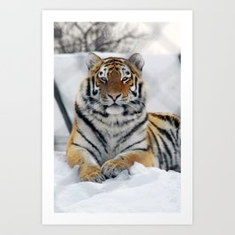 Tiger in snow Art Print