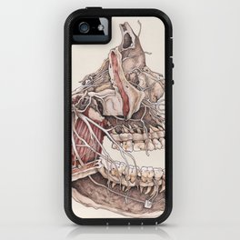 Anatomical Study of the Human Face iPhone Case