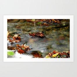 Stream & Leaves Art Print