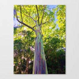 Rainbow Eucalyptus Trees Canvas Print