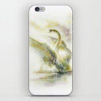 swan iPhone & iPod Skins featuring Swan by beart24
