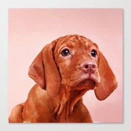 Vizsla puppy- Hungarian pointer Canvas Print