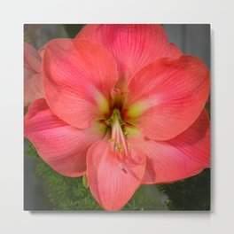 Amaryllis by Teresa Thompson Metal Print