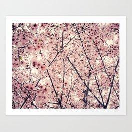 Blizzard of Blossoms Art Print