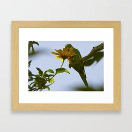Birds from Pantanal Periquito-de-encontro-amarelo Framed Art Print