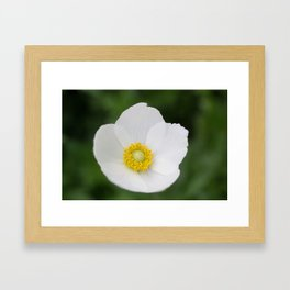 Windflower I Framed Art Print