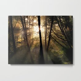 Coastal Forest Light Metal Print