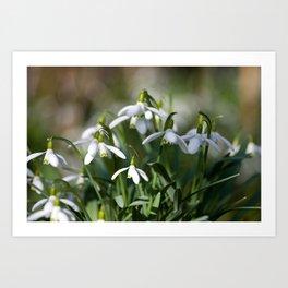 Floral Snowdrops! Art Print