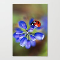 polka dot Canvas Prints featuring Polka Dot by Ekaterina La