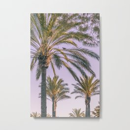 Palm tree afternoon Metal Print
