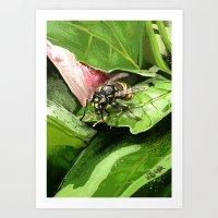 Wasp on flower16 Art Print
