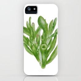 Crassula Ovata, succulent power iPhone Case