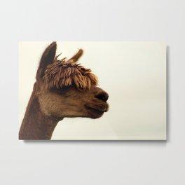 The Alpaca Metal Print