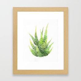 Haworthia Coarctata Framed Art Print