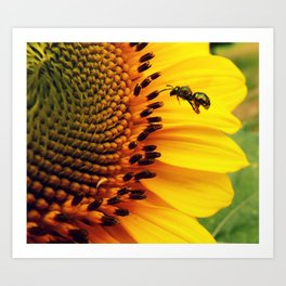 Beeing busy Art Print
