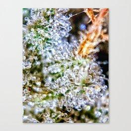 Gorilla Glue Trichomes Strain Indoor Hydro Private Reserve Buds Canvas Print